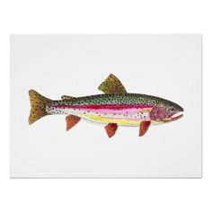 Rainbow Trout Fish Posters