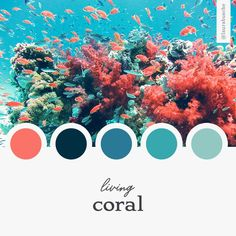 Moodboard: Living Coral - Laura Busche Brand Moodboard: Living Coral - Laura BuscheBrand Moodboard: Living Coral - Laura Busche Unique leaf pattern in pink and blue colors. Add some color in your daily life! Coral Color Schemes, Coral Colour Palette, Room Color Schemes, Room Colors, Color Combos, Coral Paint Colors, Blue Colors, Trendy Colors, Spring Colors