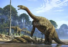 Raúl Martín: Plateosaurus