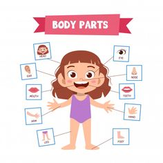 Vector Illustration Of Human Body — Stock Illustration Preschool Body Theme, Body Parts Preschool, Free Preschool, Preschool Learning, Preschool Activities, Teaching Kids, The Human Body, Human Body Parts, English Activities