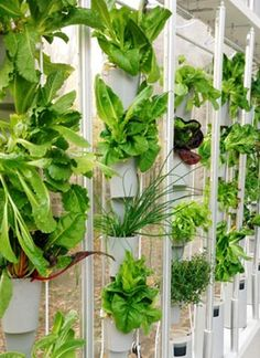 HOW TO - window farming http://www.windowfarms.com/howto/WF-HOWTO-10.pdf