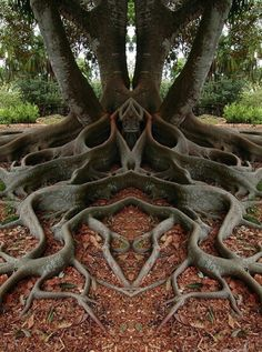 Cool looking tree / roots