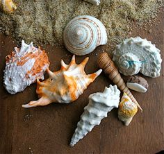 Edible Chocolate Filled Candy Sea Shells - perfect for a beach #wedding!