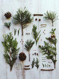 Winter Pines | Jakfruit | VSCO
