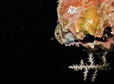 Night diving. What's it like? Read more...