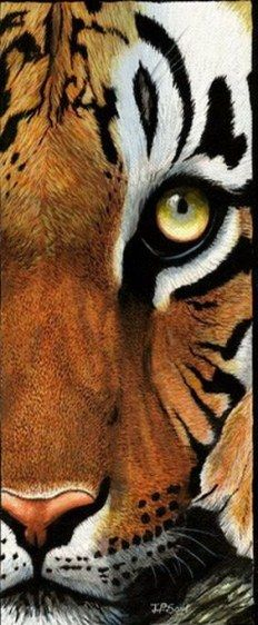 Ideas drawing nature animals illustrations for 2019 Animal Sketches, Animal Drawings, Drawing Animals, Draw Cats, Beautiful Birds, Animals Beautiful, Cat Face Drawing, Tiger Drawing, Tiger Painting