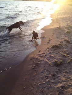 Sadie 9 weeks first trip to beach