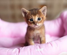 Magical-meow:
