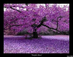 purple+is+who | 40+ Examples of Beautiful Purple Nature Colors Photography