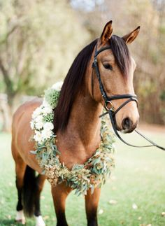 horse with a flower wreath