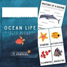 Free Ocean Life Marine Biology Printable Pack - Homeschool Compass Ocean Zones, Life Image, American Heritage Girls, Tropical Freshwater Fish, Ocean Activities, Oceans Of The World, Marine Biology, Animal Facts, Ocean Life