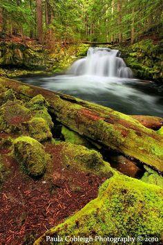 Whitehorse Falls, Oregon