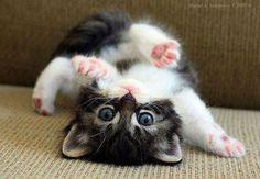 upsidedown kitty.