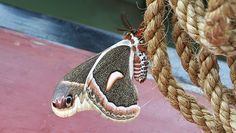 Mothapalooza 2014   field trips and workshops June 27 through 29 at Burr Oak State Park in eastern Ohio's Morgan and Athens counties