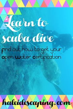 Learn to Scuba Dive – kaleidescaping Learn To Scuba Dive, Wetland Park, Below The Surface, Scuba Gear, Snorkelling, Colorful Fish, Open Water, Cool Eyes, Scuba Diving