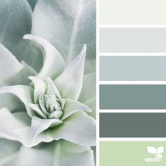today's inspiration image for { succulent tones } is by @rotblaugelb ... thank you, Julia, for another incredible #SeedsColor image share!