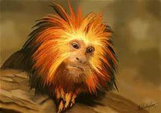 Lion Monkeys - Bing Images