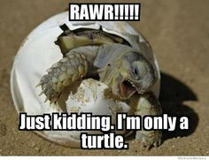 RAWR!!!!! Just kidding. I'm only a turtle.