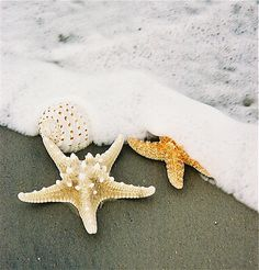 Sea Shells By The Sea Shore | Flickr