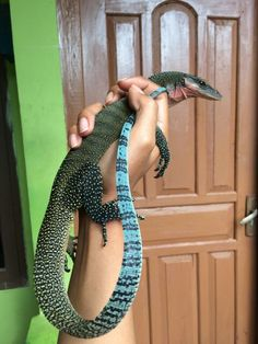 Varanus jobiensis - Anita Smith Home Les Reptiles, Cute Reptiles, Reptiles And Amphibians, Big Lizard, Cute Lizard, Rare Animals, Cute Baby Animals, Geckos, Leopard Gecko Cute