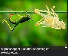 Let's learn something new today. Selection of interesting science facts and photos. - Interesting - Check out: Interesting Science Facts and Photos on Barnorama Reptiles, Amphibians, Interesting Science Facts, Interesting Animals, A Bug's Life, Beautiful Bugs, Amazing Nature, Image Of The Day, Small World