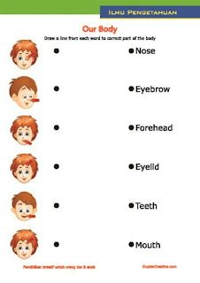 lembar belajar bahasa inggris untuk SD, membaca dan mencocokkan nama anggota bagian tubuh manusia