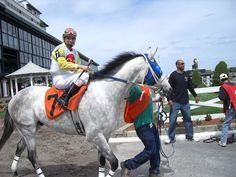 Female Jockeys.com--Tammi Piermarini