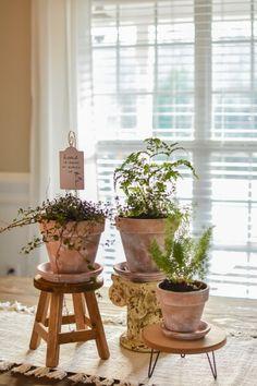 Diy Planters, Planter Pots, Potted Plant Centerpieces, Garden Pots, Garden Ideas, Backyard Ideas, Room With Plants, Terracotta Pots, Cool Plants