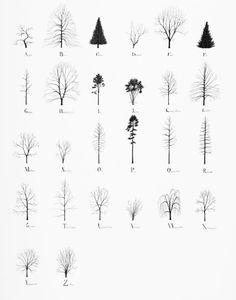 Tree Alphabet, 2015, pencil and ink on paper, 70 x 100 cm. First exhibited at the Zentrum Paul Klee in Bern, Switzerland at the group exhibition About Trees.