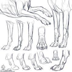 Study: Canine forepaws by CobraVenom.deviantart.com on @deviantART: