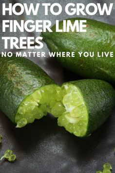 How To Grow Finger Lime Trees In Pots No Matter Where You Live is part of Potted trees - This small citrus species is cherished for its tiny, juicefilled pearllike vesicles, which are a bit like 'lime caviar ' Here's how you can grow it Citrus Trees, Lime Trees, Fruit Garden, Vegetable Garden, Fruit Plants, Edible Garden, Organic Gardening, Gardening Tips, Caviar Lime