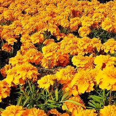 Mi ci tufferei sopra #expo #expo2015 #expomilano #expomilan #italy #milano #milanodavedere #china #cina #zhongguo #orange #nature #flower #flowers #love #happy #happiness #awesome #cool #yay by mishamashi