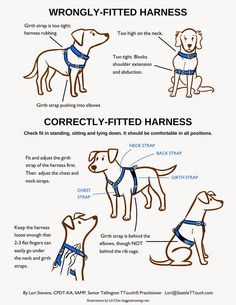 Fitting a Harness