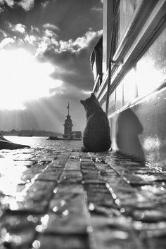 Animal Photography, Amazing Photography, Street Photography, Lines In Photography, Cool Pictures, Cool Photos, Image Chat, Photo Chat, Jolie Photo