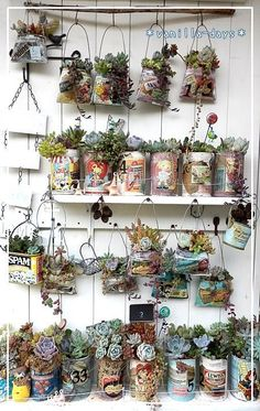 Succulents in old cans. Might be a fun project!