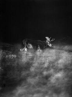 George Shiras, Elan, Minnesota 1909 © National Geographic Creative archives