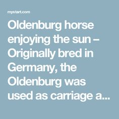 Oldenburg horse enjoying the sun – Originally bred in Germany, the Oldenburg was used as carriage a horse because of its high step and stylish body type.