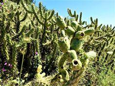 Vakre Sicilia – Roadtrip i 8 dager! I 8, Catania, Cactus Plants, Christmas Lights, Road Trip, Cactus, Christmas Fairy Lights, Road Trips, Christmas Candles