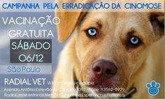 Mural Animal: Amanhã vacinação gratuita contra a Cinomose em São...
