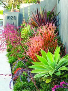 Create a drought-friendly landscape. (Originally featured on a California-Friendly Landscape Contest hosted by Roger's Gardens in Orange County, CA)