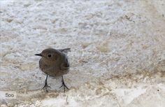 Uccellino curioso by Nicola Di Nola on 500px