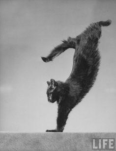 Gjon Mili: Blackie, Gjon Mili's cat, jumping, 1943