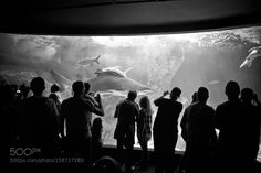 Shark by Leonor #nature #photooftheday #amazing #picoftheday #sea #underwater