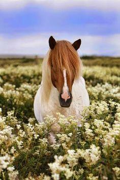 Un cavallo meraviglioso!