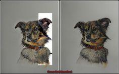 www.artGewa #polychromos #buntstift #animals  #cansonpaper #cat #coloredpencils #commission #commissionedart #drawing