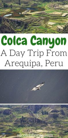 Want to visit the beautiful Colca Canyon? Save this pin to find out how to get there and what to see including the Condors. #peru #colcacanyon #condors #arequipa