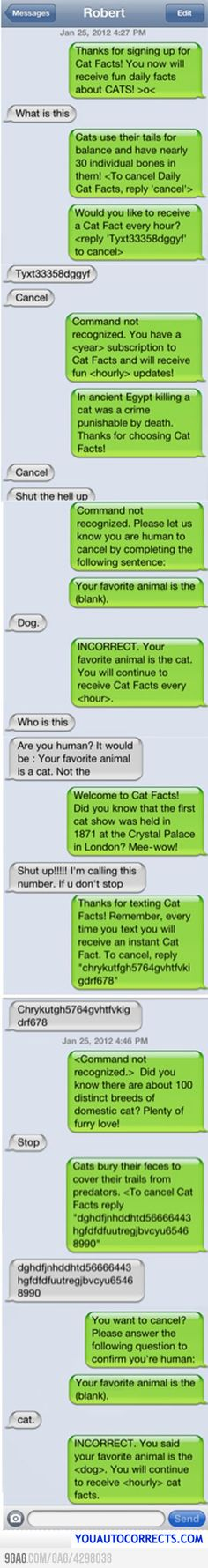 Cat facts make laugh until my stomach hurts!
