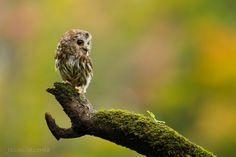 .love owls!