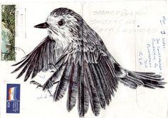 flying bird.  Bic Biro on 1980s envelope.  www.markpowellartist.com