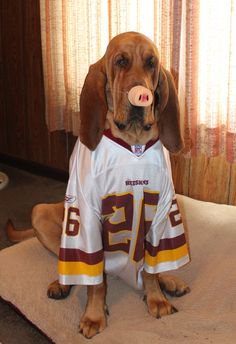 Brutus from Celina, OH, sent in by Kimberly! #Redskins
